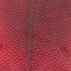 Bobrzy ogon czerwony