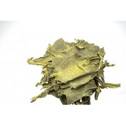 Skóra żaby żółta