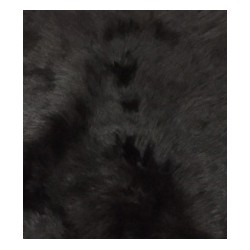 Futro niedźwiedzia II gatunek