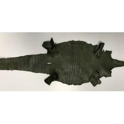 Krokodyl nilowy brzuch